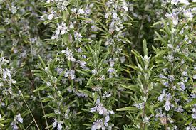 bulk-wholesale- herbs
